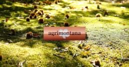 Agrimontana: miele e confetture dal 1972